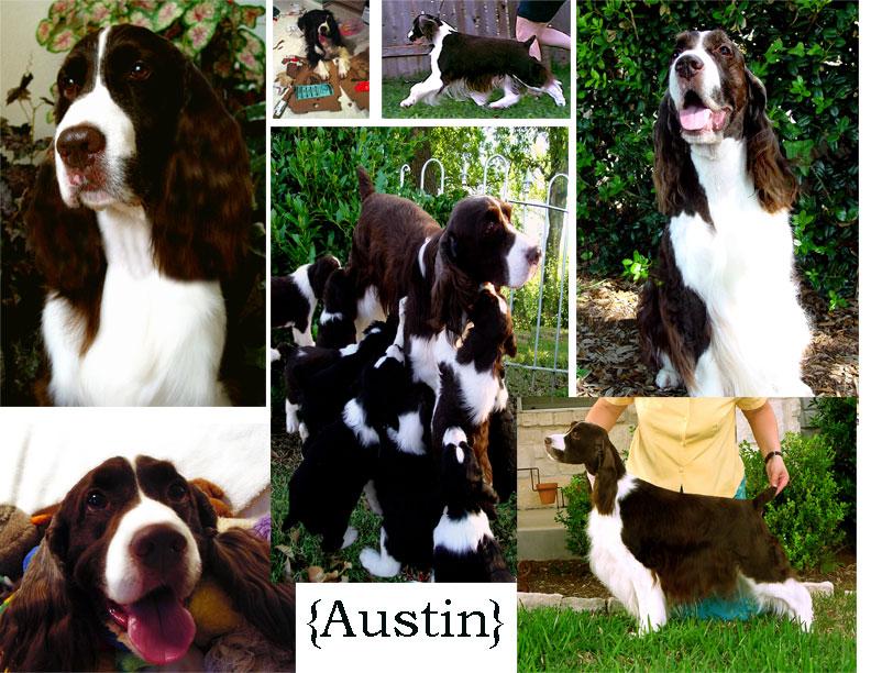 Austin-Collage