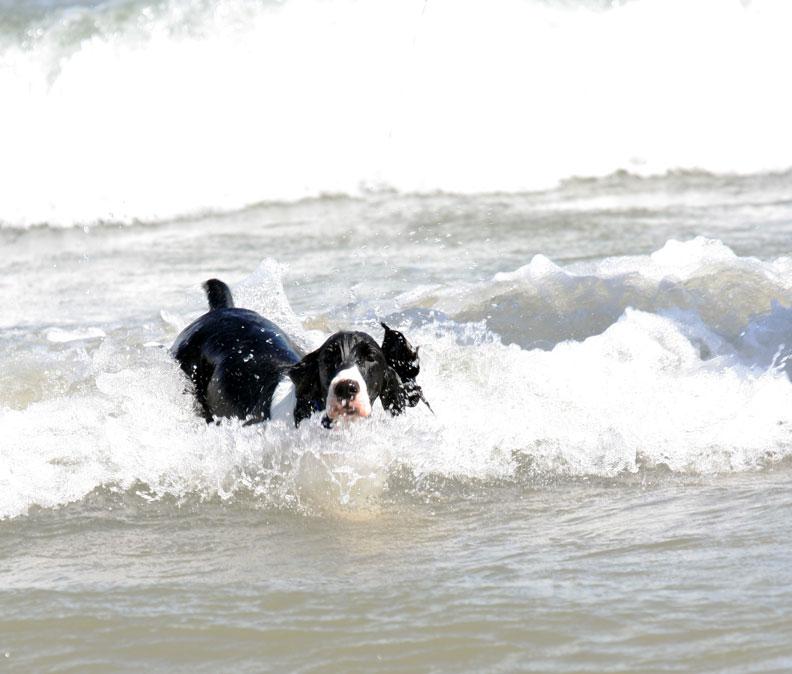 Shelley-beach-2