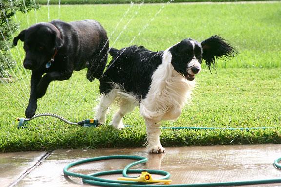 Sprinklerdogs007copy_1